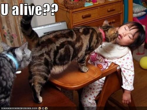 alive,asleep,caption,captioned,cat,checking,human,passed out,question,toddler,you