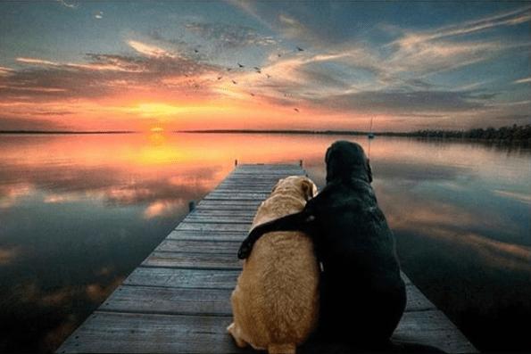 friendship dogs instagram photos labradors love - 5408005