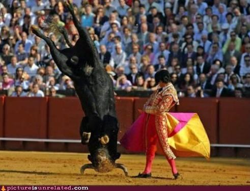 bull bullfighter bullfighting matador wtf - 5408039936