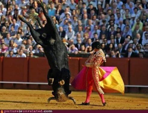 bull bullfighter bullfighting matador wtf - 5408039936