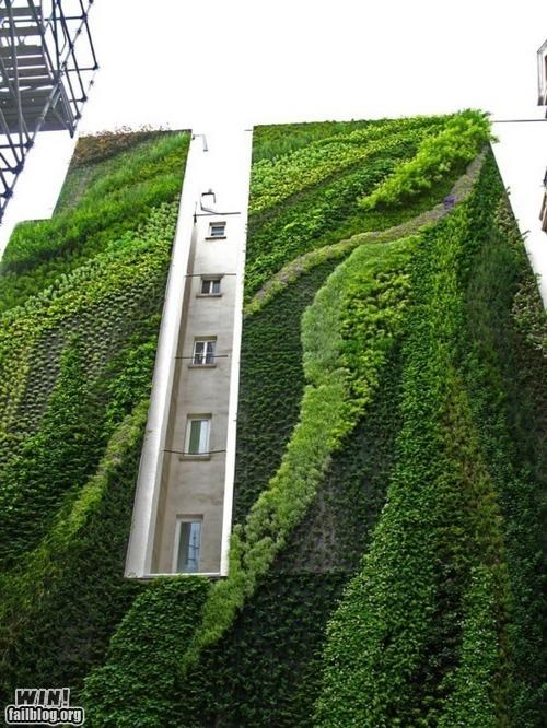 Brother Nature FTW building foilage ivy object subject the other wall