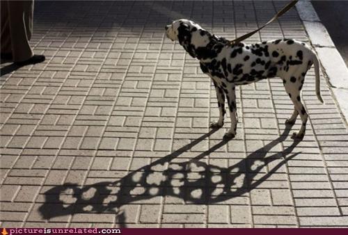 best of week dogs wtf - 5408467456