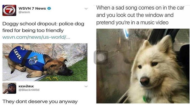 Wholesome dog memes - dog meme about a police dog that got fired for being too friendly and a dog listening to sad music in the car with and pretending to care