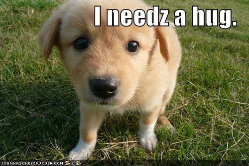 cute golden retriever puppy - 540869888