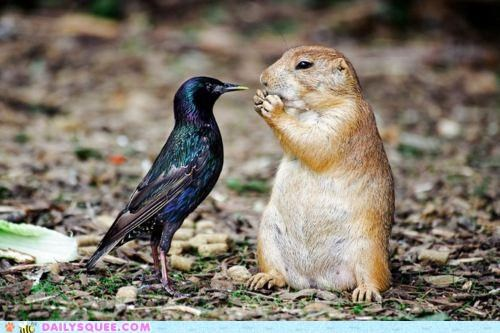 bird,contest,Interspecies Love,prairie dog,Staring,staring contest,starling