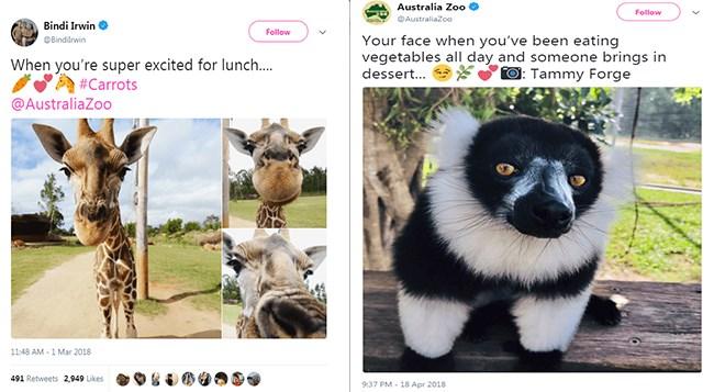 twitter steve irwin australia zoo tweets daughter animals - 5409029