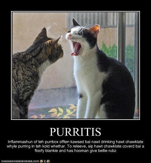 PURRITIS