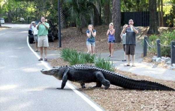 street people together photos alligators florida walking - 5409797