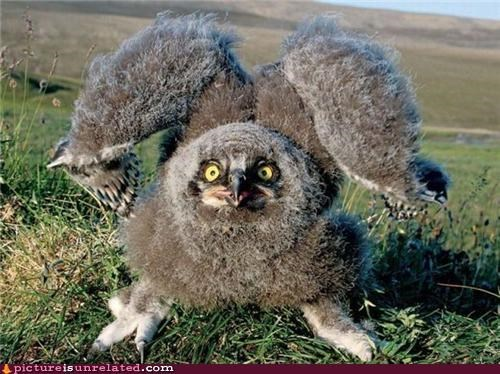 come at me bro,Owl,wtf