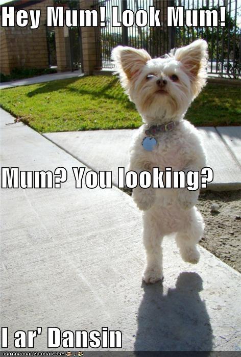 dance dancing look mom standing standing up terrier whatbreed - 5410480384