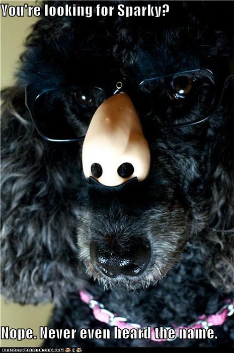 disguise disguised groucho marx never heard of him nope sparky what whatbreed - 5410560768
