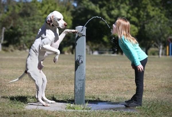 animals being helpful