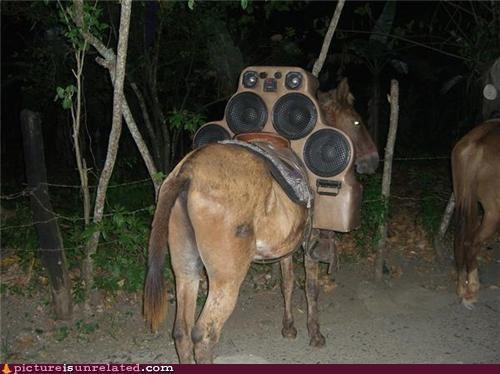 donkey horse Music wtf - 5410622976
