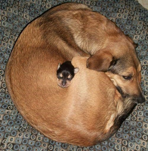doggeh,Look At These Dogs,Snuggling Dogs