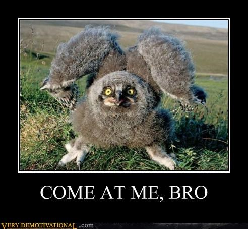 animals birds bro come at me hilarious - 5411065344