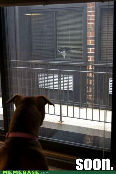 animemes cat dogs double neighbors SOON windows - 5411254528