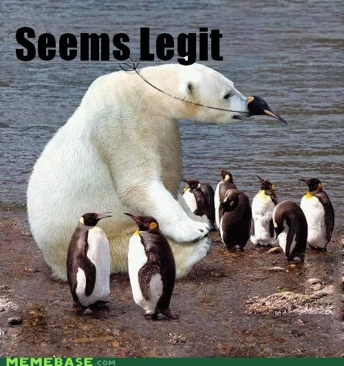 animals,animemes,food,penguin,polar bear,seems legit