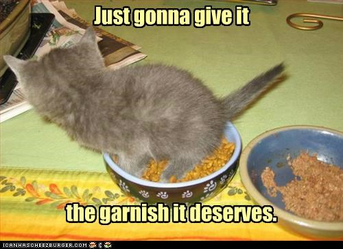 caption captioned cat deserves do not want food garnish give going to just kitten noms - 5411335424