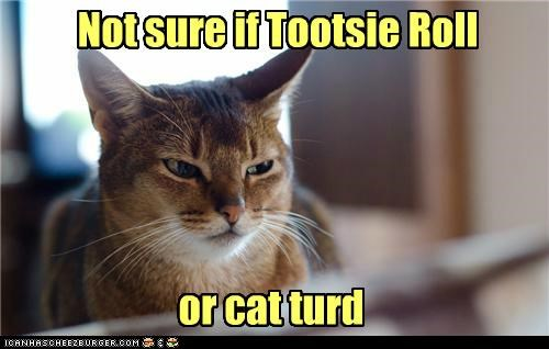 caption,captioned,cat,confused,fry,futurama,meme,not sure,tootsie roll,turd