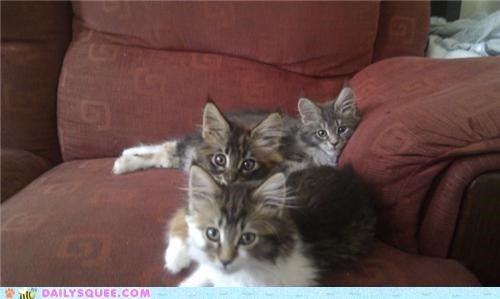 Babies baby cat Cats cuddle cuddles cuddling kitten reader squees siblings - 5411760128