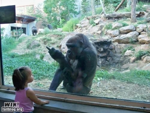 gorilla kid middle finger rude the bird zoo