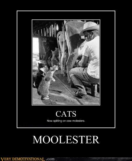 animals,cat,cow,hilarious,molester