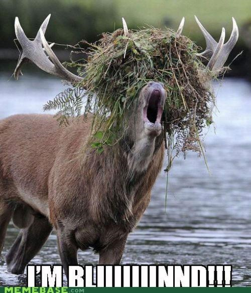 animals animemes blind gross Memes moose - 5412582656