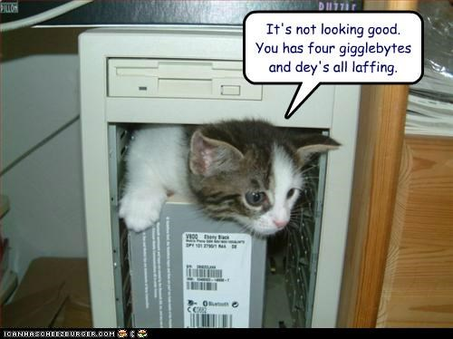 caption captioned cat computer four gigabytes giggle good inspecting laughing looking misinterpretation not prefix pun