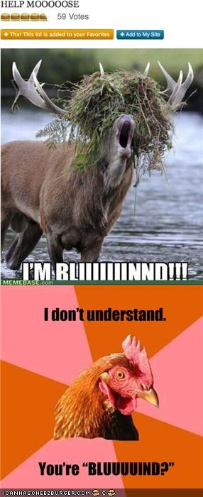 Cheezburger Image 5413233408