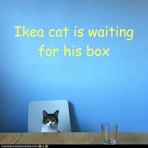Ikea cat is waiting for his box