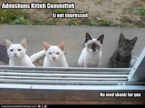 Admishuns Kitteh Committeh Iz not impressed No med skoolz for you