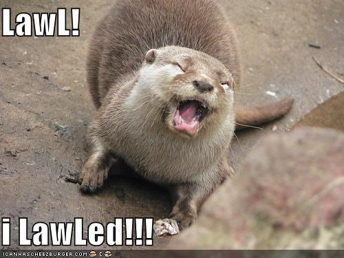 animals,Hall of Fame,i lold,laughing,lol,otter,silly