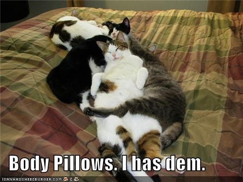 body caption captioned cat Cats Hall of Fame i has pile Pillow pillows sleeping - 5414088448