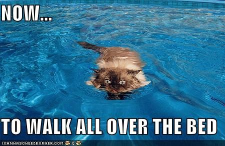 all bed caption captioned cat himalayan now over payback revenge swimming walk water wet