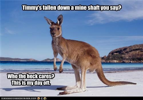 beach im-not-a-dog kangaroo lassie this-doesnt-seem-right timmy