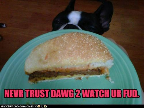 Cheezburger Image 5414282752
