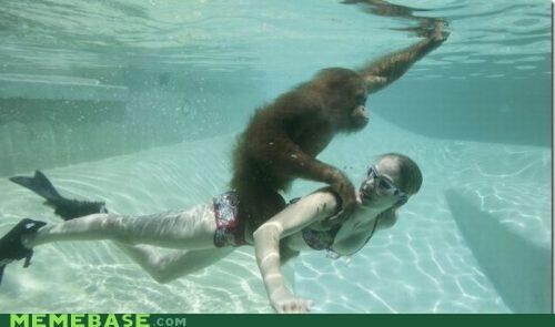 onward primate swim swimming swimming pool upward wtf
