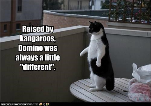 Awkward,caption,captioned,cat,different,kangaroos,odd,odd man out,raised,standing