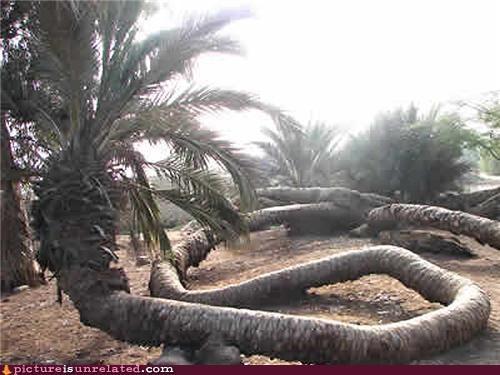 best of week Palm Tree snake wtf - 5415254784