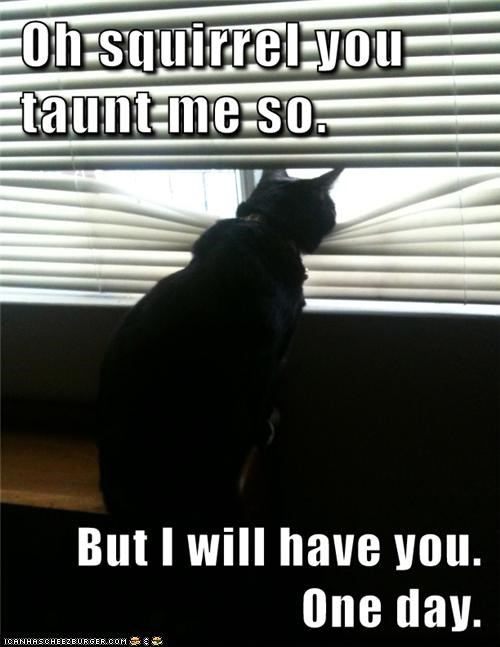 but caption captioned cat have Oh one day patience persistence SOON squirrel taunt threat waiting warning you - 5415687168