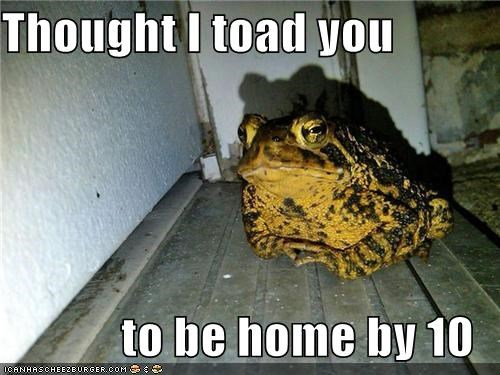 frog funny I Can Has Cheezburger toad - 5415974656
