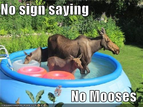 awesome,backyard pool,Hall of Fame,moose,moose in a pool,pool