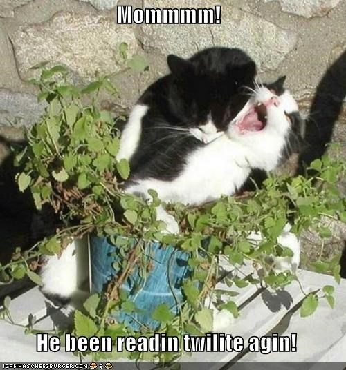 again biting bitten caption captioned cat Cats do not want help mom reading twilight vampire