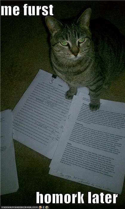 cat Hall of Fame homework I Can Has Cheezburger pay attention stop - 5416143104