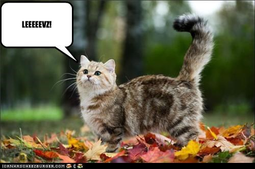 caption captioned cat derp derpy excited leaves shouting - 5416151808