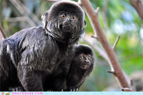 Awkward baby camera candid expression mother smiling squee spree tamarin tamarins - 5416663808