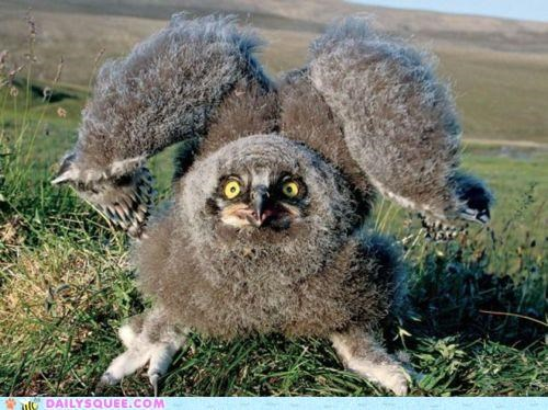 baby creepicute downy intimidating Owl poll poofy threatening whatsit