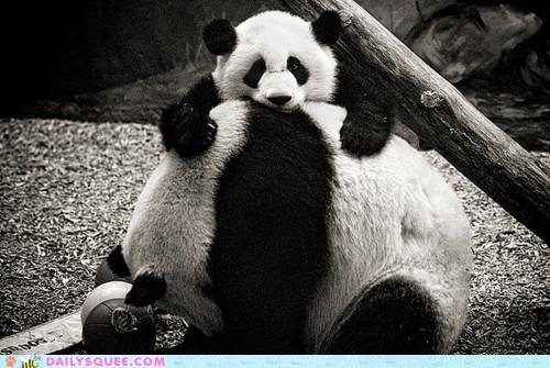 fun jenga panda panda bear panda bears pile stack universal - 5416847104