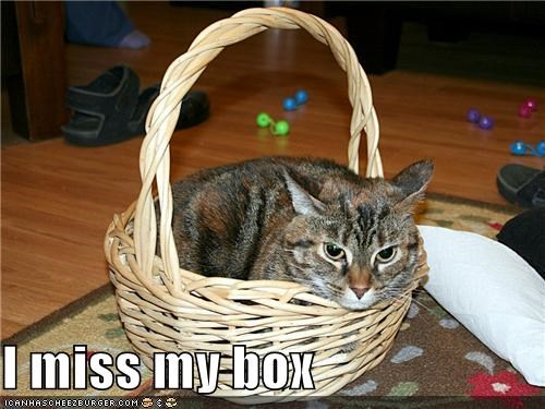 basket box caption captioned cat do not want miss substitute