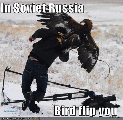 bird funny I Can Has Cheezburger - 5417172480